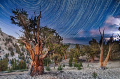 Distant Night Storm in the Patriarch Grove (Harold Davis) Tags: harolddavis sca whitemountains workshop bristlecone bristleconepines earthandspace wmrs competition:astrophoto=2012