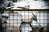 love (kozumel) Tags: love germany studio geotagged office nikon amor oficina fluegel barbara palazzo poseidon porcelain deu aladin porzellan quattro manufacture fábrica porcelana harlekin porzellanmanufaktur schoenwald schönwald porzellandesign wintervogel camiloruedalopez camera:brand=nikon flickr:user=kozumel flickr:user=42962212n00 nikond7000 twitter:user=kozumel lastfm:user=kozumel web:site=kozumelinfo camera:manufacturer=nikon flickr:userid=42962212n00 twitter:username=kozumel dopplr:traveller=kozumel flickr:userid=kozumel httpwwwkozumelinfo camiloruedalópez geo:lat=5019324820 geo:lon=1208846927 barbarafluegel vegetario