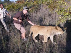 FC Blog Sam Towne Walking with Lion 3