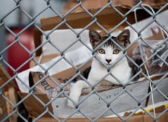 Framed Stray: Red Hook, Brooklyn (Chris Arnade) Tags: newyorkcity cats brooklyn redhook straycats chrisarnade