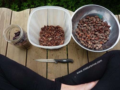 Processo - descascar as sementes do cacau