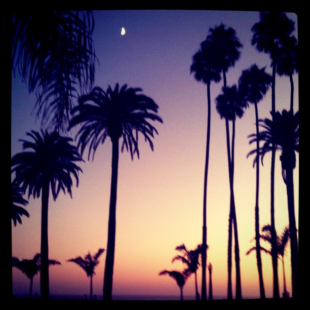 Sunset. Palm trees. The moon. Santa Monica.