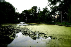 The Duck Pond (alwayssunnay) Tags: house reflection nature water fountain duck pond neighborhood the suberbs