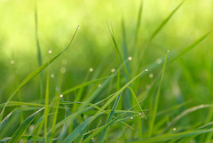 2 morning grass (RoYaLHigHnEsS1) Tags: green grass waterdrop
