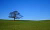 Bute Tree (Hugh Spicer / UIsdean Spicer) Tags: uk tree scotland february 2010 bute isleofbute kingarth