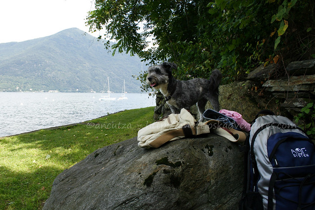 foto vacanze col cane sul lago maggiore
