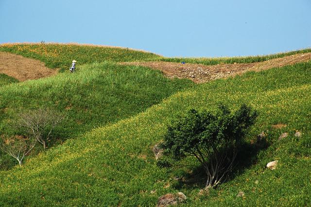 2011.09.04 花蓮 / 富里 / 六十石山