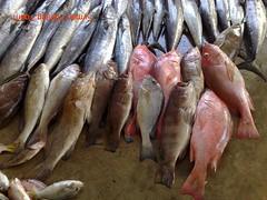20090705 (fymac@live.com) Tags: mackerel fishing redsnapper shimano pancing angling daiwa tenggiri sarawaktourism sarawakfishing malaysiafishing borneotour malaysiaangling jiggingmaster