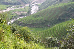 mountain agriculture (Little Raven) Tags: mountains drive asia southeastasia rice paddy vietnam northern việtnam hoanglienson tonkinesealps