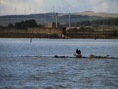 Turbines (Bricheno) Tags: river scotland clyde boat gulls escocia estuary swans cormorant szkocja irvine windfarm firth turbines schottland ayrshire ardrossan scozia cosse  esccia riverirvine   scoia