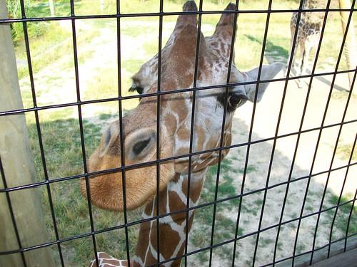 Zoo - 7-17-11 022