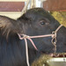 IMGP6954-1_young-buffalo