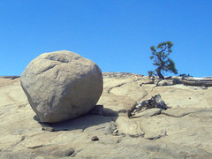 Big rock, twisty little tree (thamiter) Tags: california usa mountains tree northerncalifornia august boulder sierra reservoir casio granite pointandshoot sierras sierranevada mountainlake spicer campingtrip alpinecounty stanislausnationalforest 2011 twistytree newspicermeadowreservoir
