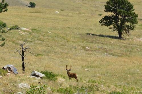 Colorado 2011 022