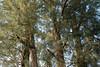 850C0816 (Zoemies...) Tags: trees beach balikpapan melawai zoemies