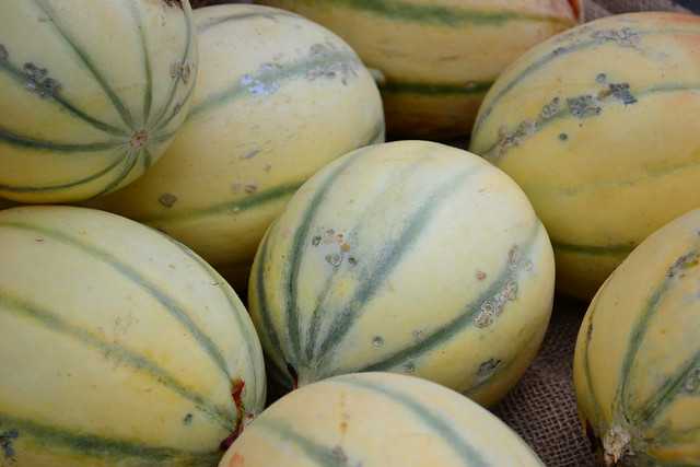 Heirloom Cantaloupe
