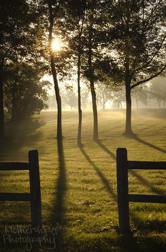 238:365公园的晨雾