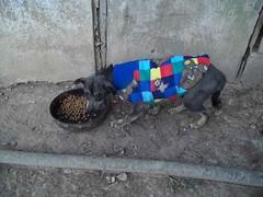 Cães do Jardim ganham agasalhos