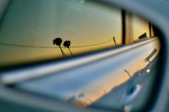 LA Sunset (Roy Cheung Photography) Tags: us usa united states america la los angeles pine tree sunset dawn reflect reflection mirror rear car automobile blue gold sky highway reflected image california cinematic road trip roadtrip dusk nikon d7000 d7k