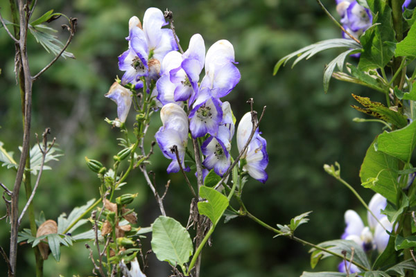 fleurs-montagnes03