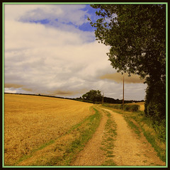 A Berkshire Lane (cazjane97) Tags: august berkshire oaktree chidhood canonpowershotsx210is berkshirelane