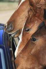 carwash (simonrackleft) Tags: horses galope