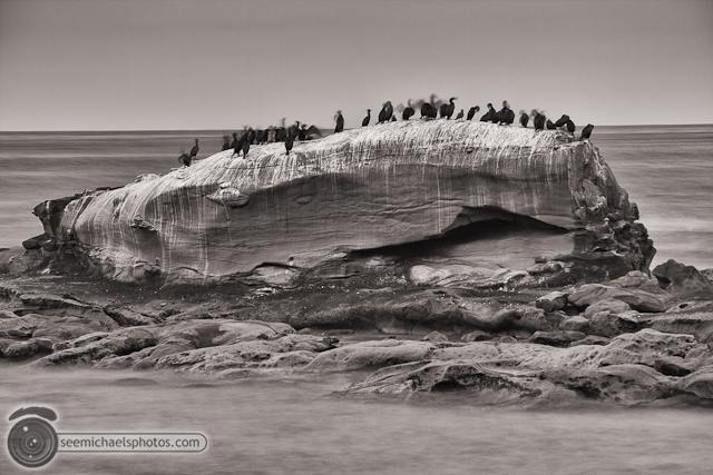 Bird Rock 82311 © Michael Klayman-003