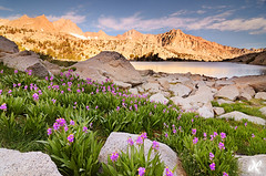 Shooting Stars by Moonlight - Moonlight Lake, Sabrina Basin, High Sierra  (Explored - Thanks!) (Joshua Cripps) Tags: california pink flowers blue orange plants usa lake mountains green water students yellow sunrise fun quality professional clear backpacking granite wildflowers sierranevada bishop instruction shootingstars tokina1224mm mountdarwin photographyclasses manfrottotripod photographyworkshops moonlightlake joshcripps leegndfilters nikond7000 acratechballhead
