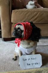 He's climbing in yo' windows, snatching yo' people up. (WeeLittlePiggy) Tags: dog halloween costume pug hideyokids