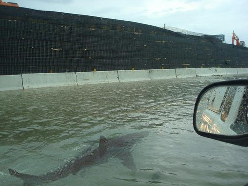 Shark Spotted Swimming On Manhattan'S West Side Highway [Pic]