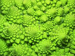 cauliflower fractals 2 of 5 (Mark Watson (kalimistuk)) Tags: food green vegetables lumix vegetable panasonic g1 fractal fractals dmc romanescobroccoli romancauliflower