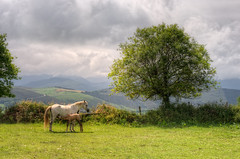 Campo de San Roque, Tineo (Asturias, Spain), HDR (marcp_dmoz) Tags: horses espaa horse tree grass clouds photoshop arbol caballo 50mm spain nikon map meadow wiese wolken asturias nubes campo handheld gras prado nikkor yerba pferd tone baum hdr tineo sanroque spanien potro hierba yegua foal fohlen photomatix asturien tonemapped tonemapping tonemap d700 gettyimagesiberiaq3