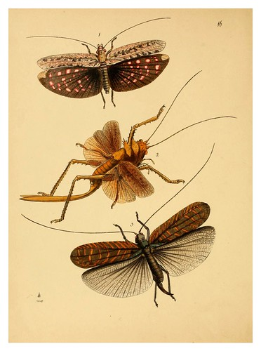 006- The cabinet of oriental entomology…1848- John Obadiah Westwood