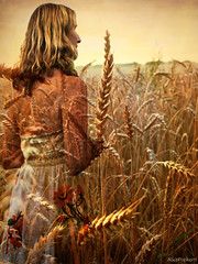 abundance of summer (AlicePopkorn) Tags: summer greek golden cornfield demeter sommer wheat goddess creativecommons abundance ripe kornfeld reif weizen gttin flle griechische alicepopkorn demetermythos