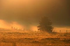 Eifel, sunrise fog (Eifeelgood) Tags: light summer camp sky clouds bestof nebel magic favorites atmosphere places selection best eifel silence myfavorites magicmoments summercamp theresalight magicplaces eifeelgood flowingstructures magiceifel