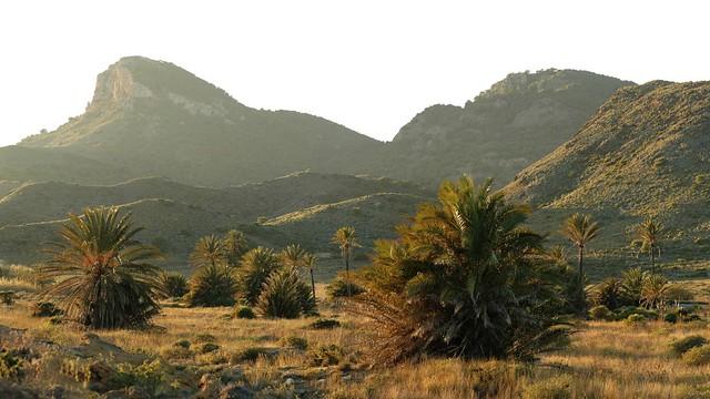 Palmeral de Calblanque