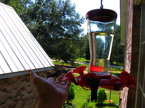 CrabAppleLane Hummingbirds - September 11, 2011