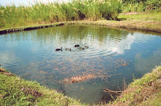 Fish Pond, photo by WorldFish, 2005
