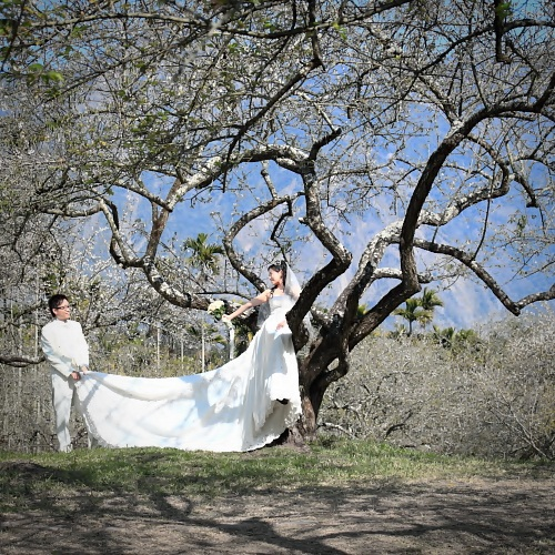 wedding in prune trees