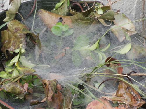 Spider Web _ 4725