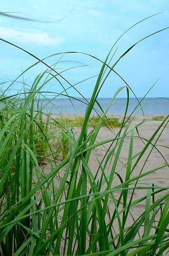 seagrass_004