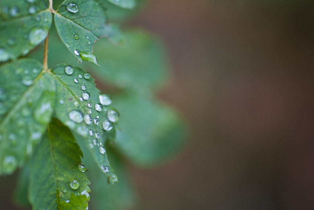 Droplets of Sunday
