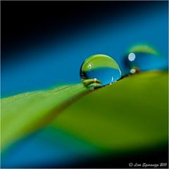 30082011-_DSC0054 (Lino Sgaravizzi ) Tags: macro water ngc natura drop acqua gocce mygearandme mygearandmepremium mygearandmebronze mygearandmesilver mygearandmegold