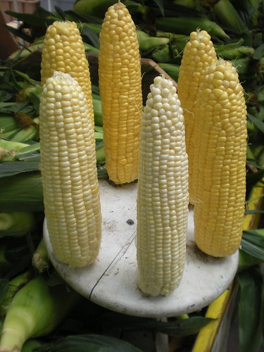 Fresh sweet corn: Madison Farmer's Market