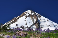 Big beautiful mountain (Just Peachy!) Tags: oregon mthood wildflowers lupine cooperspur mthoodnationalforest mthoodwilderness