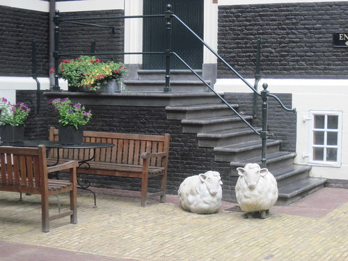Sheep in Courtyard
