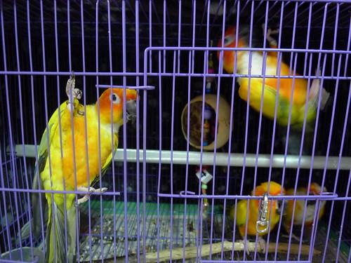 Queen's 鳥民宿的金太陽