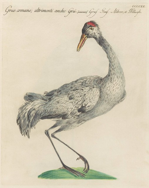 engraved illustration of a crane standing on one leg