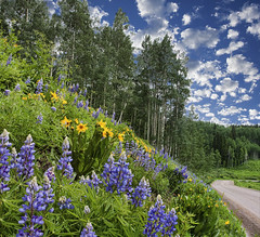 Kebler pass (wishiwsthr) Tags: rural colorado wildflowers aspen crestedbutte keblerpass wishiwsthr