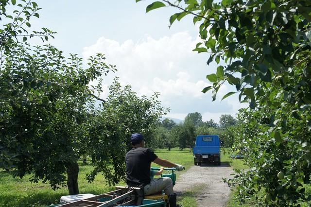our farm on August, 2011 _3